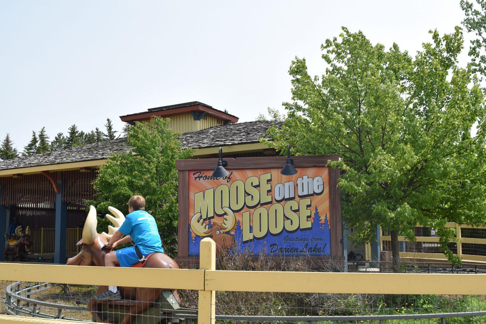 Moose_0-scaled