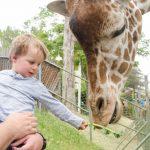 A child feeding a giraffe.