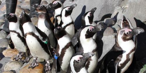 Penguin Passage