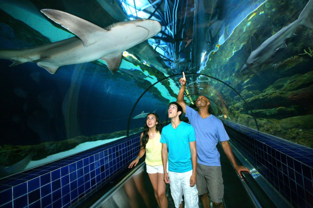 shark experience at six flags