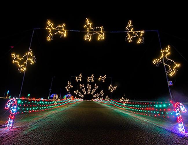 Lit reindeer and other Christmas lights