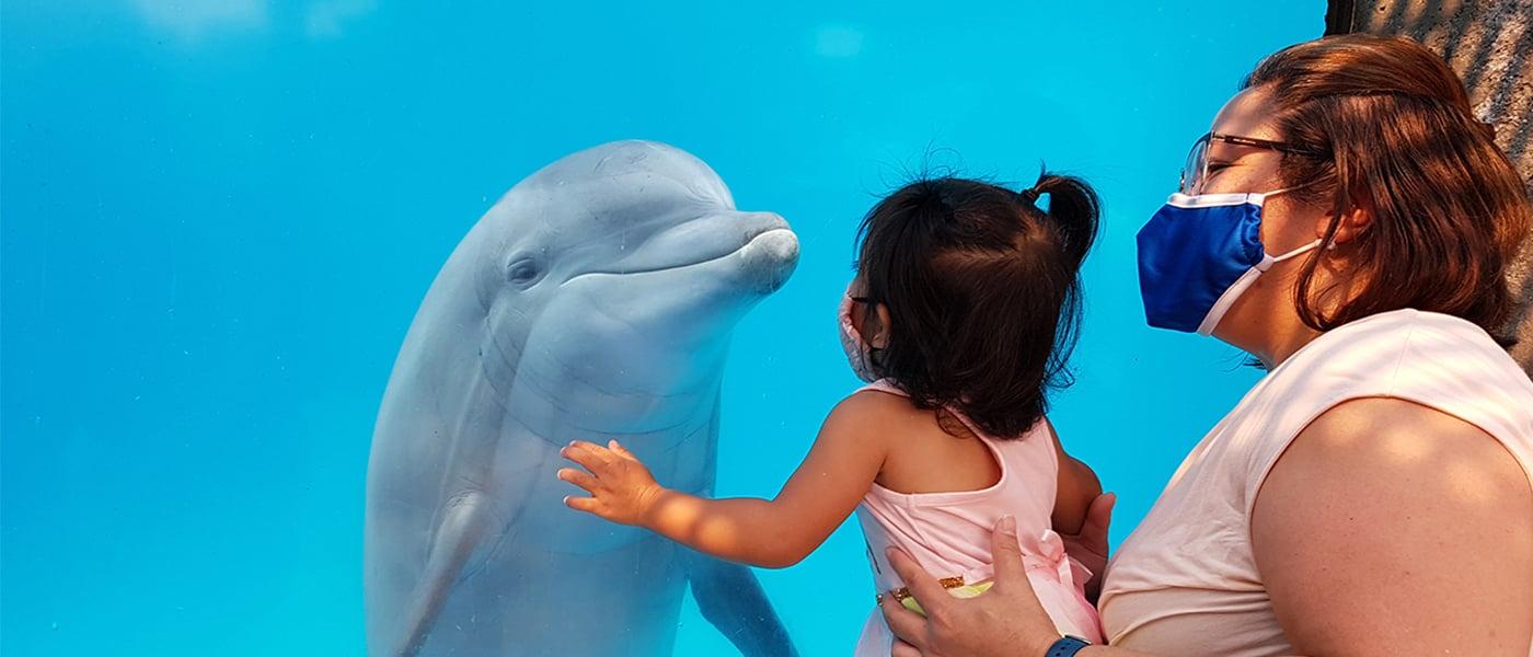 Mwe-dolphin_girl_border