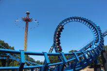 Blue Hawk thumbnail photo