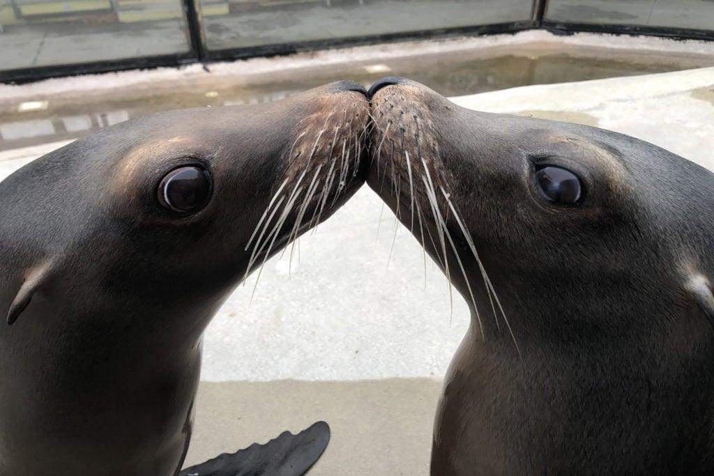 sea-lion-kiss-k-5-1