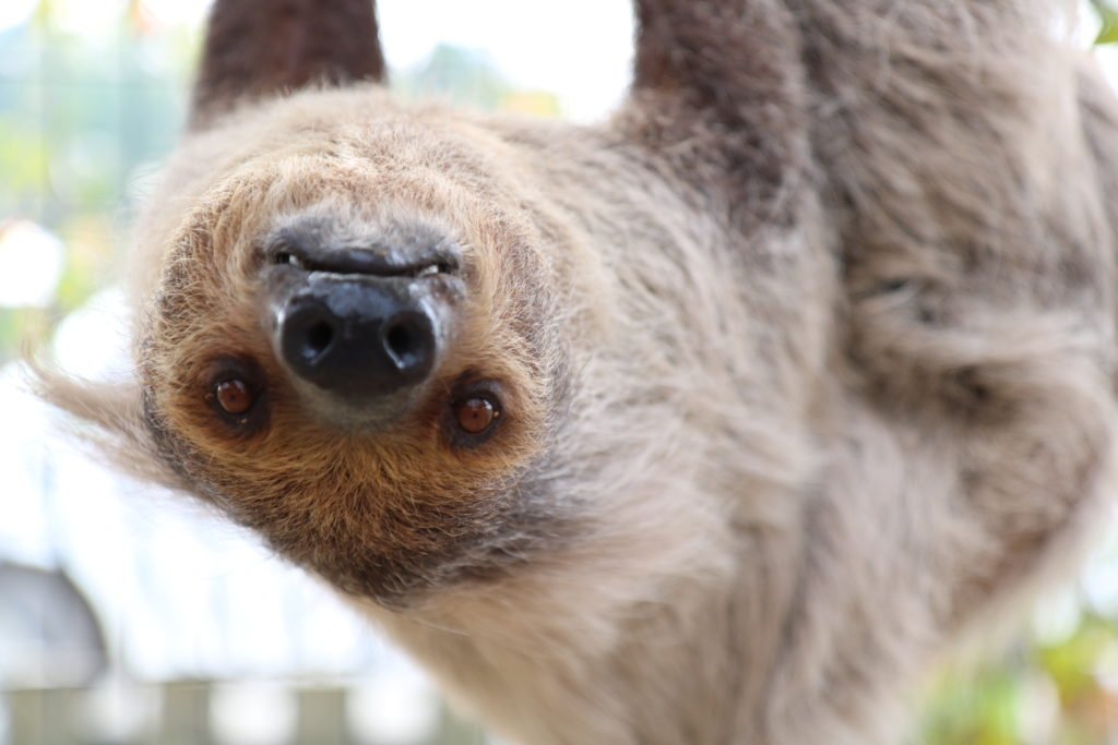 sloth-6-8